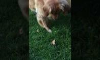 Šuo surado labai baisų lapą