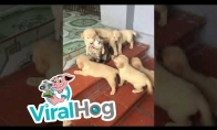 Katiną užpuola armija draugiškai nusiteikusių šunyčių