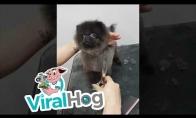 Šunytis šoka iš džiaugsmo, kol jį kerpa kirpykloje