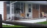 Šuo sportuoja lyjant lietui