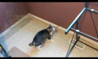 Katinas suglumo, kai nuo stalo buvo nuimtas stiklo paviršius