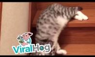Tingaus katino nusileidimas laiptais