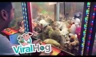 Katinas užstrigęs žaidimų automate