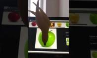 Papūgėlė bando suvalgyti obuolį ant ekrano
