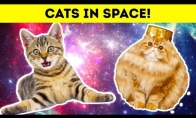 Katės kosmose