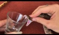 Ką daro gyvatės nuodai su krauju?