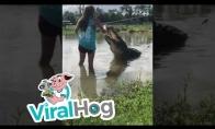 Mergina išsiauklėjo aligatorių