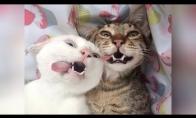 Labai juokingi gyvūnų video