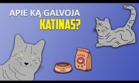 Katino mintys