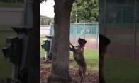 Šuo niekaip negali atrasti voverės, kuri jam panosei