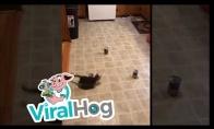 Kaip lengvai priversti katiną įveikti kliūčių ruožą