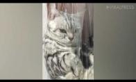 Katinas ramiausiai kabo plastikiniame maiše