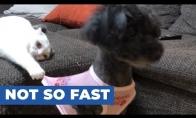 Katinas laiko šunį už marškinių