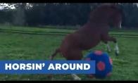 Arklys žaidžia su dideliu kamuoliu