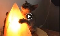 Katinas ir Egipto piramidės formos lempa