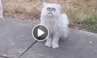 Katinas su labai gąsdinančiu žvilgsniu