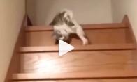 Katinas nusiridena nuo laiptų