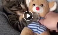 Jis negali miegoti be savo mylimo žaislo