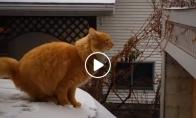 Katinai ir 9 gyvybės