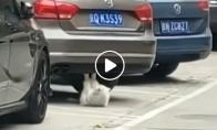Katinas daro atsilenkimus
