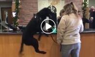 Šunytis šokinėja iš laimės