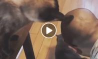 Katinas daro tai, ką mato
