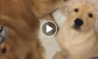 Šunyčiai pasiruošė dušui
