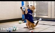 Šuo, pelnęs 3 pasaulio Gineso rekordo