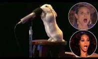 Talentingiausi gyvūnai pasaulyje