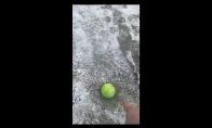 Šunyčiai bando paimti prišalusį teniso kamuoliuką