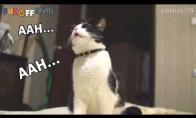 Katinas, kuris niekaip negali sustoti čiaudėti