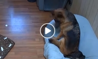 Šuo prisėdo katiną