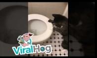 Katinas ir vanduo tualete