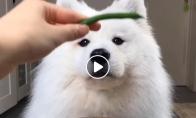 Šuo skanauja įvairaus maisto