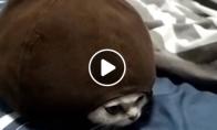 Katinas pavirto vėžliu