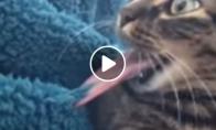 Katino liežuvis prilipo prie antklodės