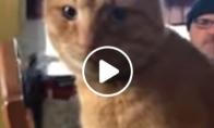 Keistai sėdintis katinas