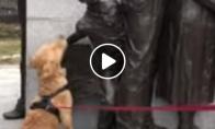 Šuo prašo statulos kad jį paglostytų