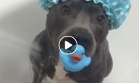 Šunytis dievina vonią