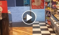 Žuvėdra apsivagia parduotuvėje