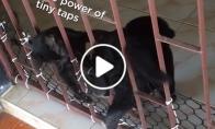 Katinas padeda šuniui pralysti pro vartelius