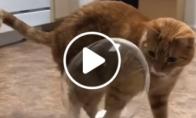 Katino reakcija į sprogusį burbulą