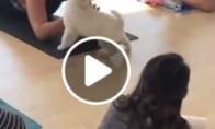 Šunyčiai jogos klasėje