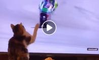 Katinas nuverčia motociklininką