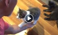 Kaip reikia pakelti katiną