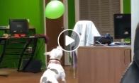 Šuo žaidžia su balionu