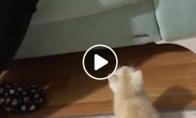 Mažas kačiukas, didelis šuolis