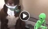 Šuo sutrikęs dėl šalia šokančio ateivio