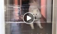 Šuo, kurio taip lengvai neapgausi su permatoma izoliacija