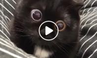 Juoda katė didelėmis akimis